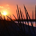 Ferry Beach by Colleen Phaedra