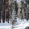 Festive Forest by Toula Mavridou-Messer