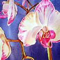 Festive Orchid Pink And White by Irina Sztukowski