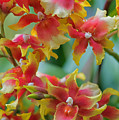 Festive Orchids by Zina Zinchik