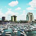 Festive Tampa Bay by Pixabay