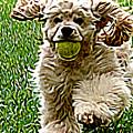 Fetch by Laura Brightwood