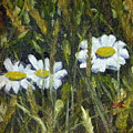 Field Daisies by Susan Coffin