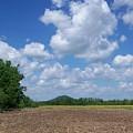 Field by Karen Thompson