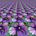 Field Of African Violets by Barbara Griffin