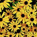 Field Of Black-eyed Susans by Susan Savad