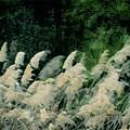 Field Of Dreams by Angelcia Wright