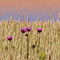 Field Of Dreams by Bill Cannon