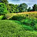 Field Of Dreams Iv by Steven Ainsworth