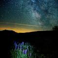 Field Of Dreams by Scott Thorp