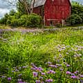 Field Of Flowers by Debra and Dave Vanderlaan