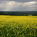 Field Of Gold Sherbrooke Quebec Canada by Pierre Leclerc Photography