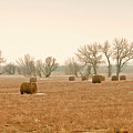 Field Of Hay by James Steele