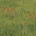 Field Of Hope by Jez C Self