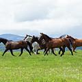Field Of Horses by Eleszabeth McNeel