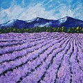 Field Of Lavender by Mike Kraus