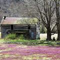Field Of Lavender  by Tammy Sullivan