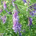 Field Of Purple Dreams by D R TeesT