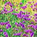 Field Of Purple Flowers by Donna Bentley