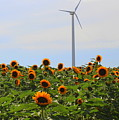 Where The Sunflowers Shine by Dora Sofia Caputo Photographic Design and Fine Art
