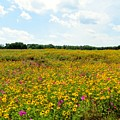 Field Of Wildflowers by Tim Townsend