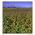 Field by R Thomas Berner