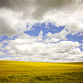Field With Dramatic Sky. by Sophie McAulay