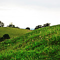 Fields In Glastonbury by Tinto Designs