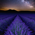 Fields Of Eden by Jorge Maia