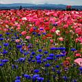 Fields Of Flowers by Jean Noren