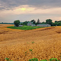 Fields Of Gold, Illinois by David Gaynor