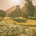 Fields Of Springtime by Jorgo Photography - Wall Art Gallery