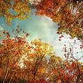 Autumn Fire by Jim Love