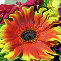 Floral Fiesta by Kathy Moll