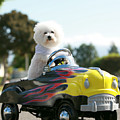 Fifi Goes For A Car Ride by Michael Ledray