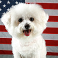 Fifi Loves America by Michael Ledray