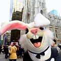 Fifth Ave Easter Bunny by Ed Weidman