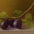 Figs From Walter's Orchard by Gema Lopez