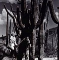 Film Homage Jean Harlow Bombshell 1933 Saguaro National Monument Tucson  Arizona  Duo-tone 2008 by David Lee Guss