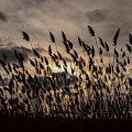 Filtered Light by Robert Coffey
