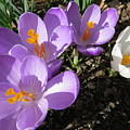 Finally Spring by Jean Costa