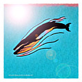 Finback Diving Through Krill by Art MacKay