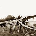 Finback Whale Skeleton Erected By Japanese Abalone Divers At Point Lobos C. 1908 by California Views Archives Mr Pat Hathaway Archives