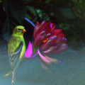 Goldfinch And Zinnia  by Ola Allen