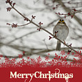 Finch Christmas by Trish Tritz