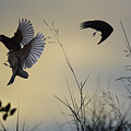 Finches Silhouette With Leaves 5 by Linda Brody