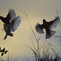 Finches Silhouette With Leaves 6 by Linda Brody