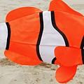 Finding Nemo by Snapshot Studio