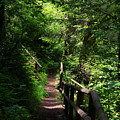 Finding The Right Path by Jeanette C Landstrom