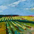 Fine Fields by Michele Norris